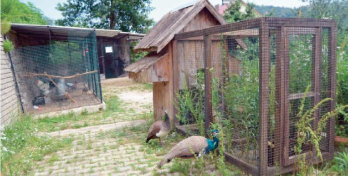 Ayvadere'yi kuş cenneti yaptı