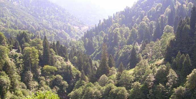 Ormanlar için emsal karar: Kamulaştırmasız el koyma!