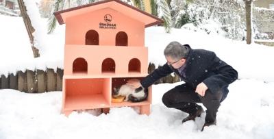 Üsküdar Belediyesi kedi ve kuşları unutmadı