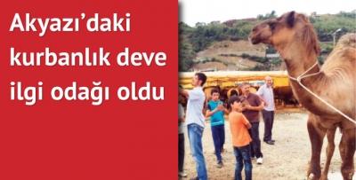 Akyazı'da Ahmet Usta'nın devesi büyük ilgi gördü