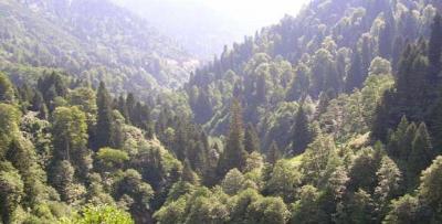 Orman arazileri için emsal karar: Kamulaştırmasız el koyma!