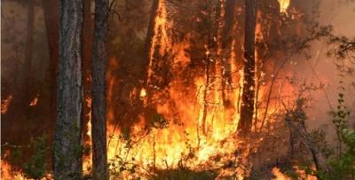 PKK orman yangını çıkaracak