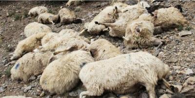PKK'nın döşediği mayına basan hayvanlar telef oldu
