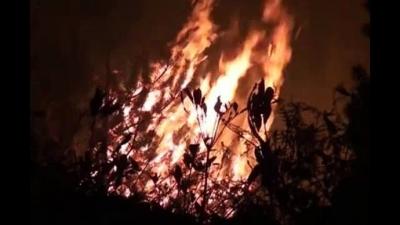 Trabzon'da orman yangını!..