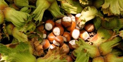 Trabzon'da örnek bahçelerde ilk hasat yapıldı