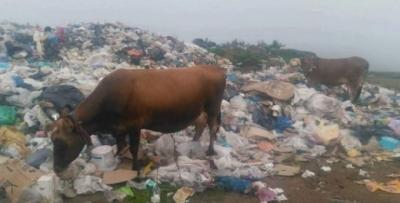 Yaylalarda çöp rezaleti!